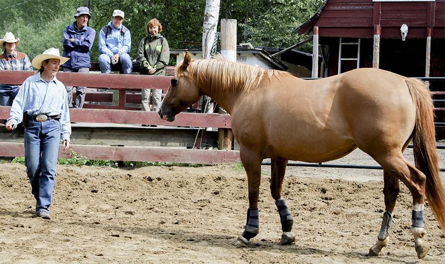 Horsewhisperer