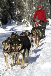Dogsledding Team